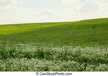 fält, grönt landskap