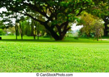 fält, landskap, grön