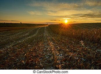 fält, liktorn, solnedgång
