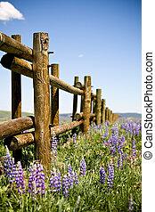 fält, lupin, genom, staket