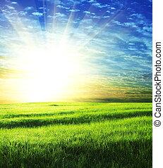 fält, på, soluppgång