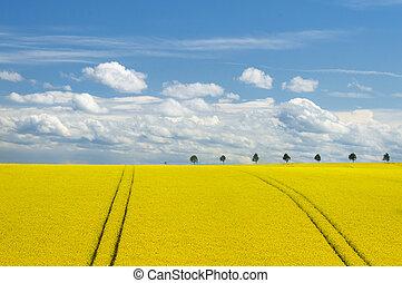 fält, sky, romantisk, canola