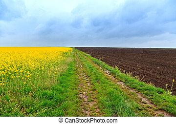 fält, väg, canola, smuts
