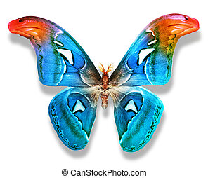 färg, fjäril