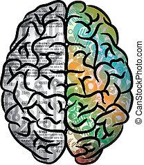 färg, hjärna, mänsklig