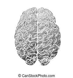 färg, hjärna, mänsklig, grå