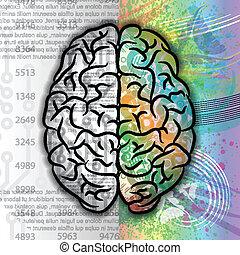 färg, hjärna, mänsklig, mönster