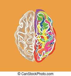 färg, hjärna, slaglängder, skapande