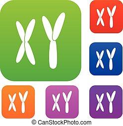 färg, sätta, kromosomer, mänsklig, kollektion