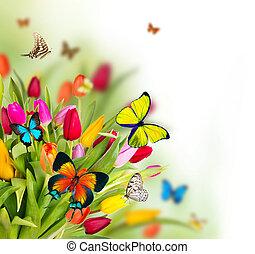 färgad, tulpaner, blomningen, med, exotisk, fjärilar