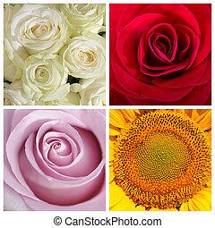 färger, av, blomningen