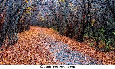 färger, falla,  hdr, skog