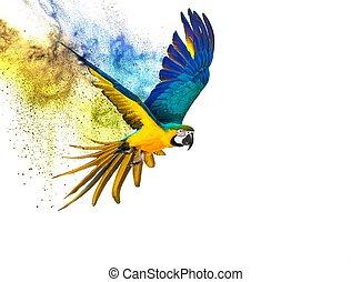 färgglatt, flygning, papegoja, isolerat, vita