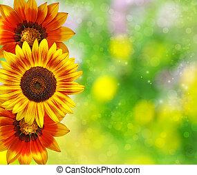 färgrik, blommig, bakgrund