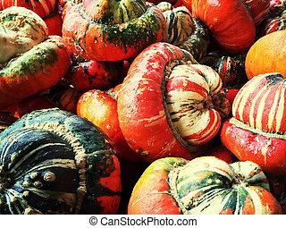 färgrik, dekorativ, turban, squashes