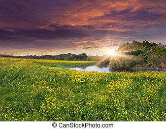 färgrik, fjäder, flowers., gula gärde, siver, dramatisk, landskap, sunset.