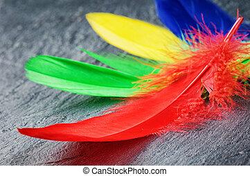 färgrik, fjäderrar