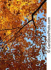 färgrik, höst träd