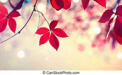 färgrik, natur, bladen, suddig, höst, bakgrund., falla, över