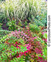färgrik, planterar, in, höst, trädgård