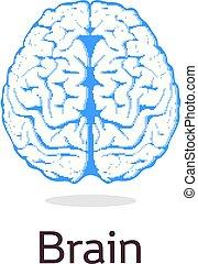 färgrik, scientifical, grafisk, learning., symbol., mänsklig, logo., hjärn-, isolerat, vektor, neurobiology, intelligens, image., bark, medicinsk, brains., hemispheres., illustration., emblem., hjärna, logotype.