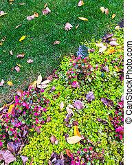 färgrik, trädgård, och, höst lämnar