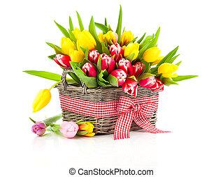 färgrik, tulpan, blomstrar, in, a, korg, isolerat, vita