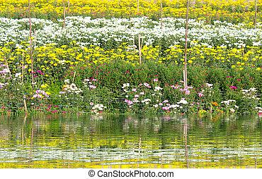 färgrik, vår blommar