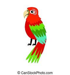 färgrik, vektor, ara, papegoja, illustration
