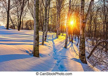 färgrik, vinter, solnedgång