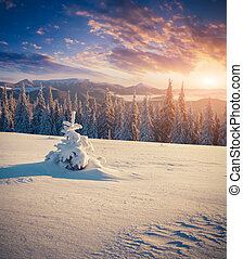 färgrik, vinter, soluppgång, in, fjäll.