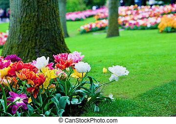färgrika blomstrar, in, fjäder, parkera, trädgård