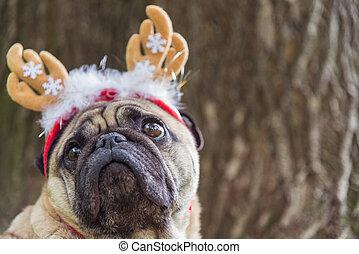 färsk, year., a, hund, av, den, mops, ras, in, a, new-year, suit.