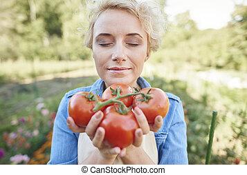 färska tomater, rättighet, från, den, fält
