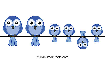 fågel, familj