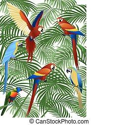 fågel, papegoja