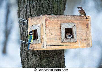 fågel, park., matare, hus, feeders., birds., träd vinter