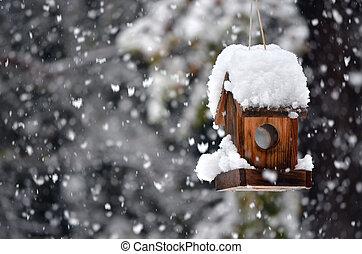 fågelhus, in, vinter