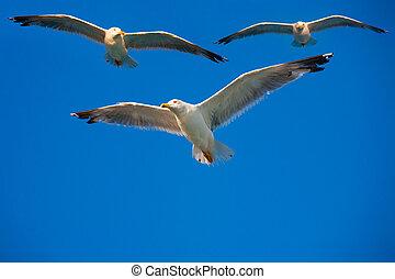 fåglar flygande, in, den, sky