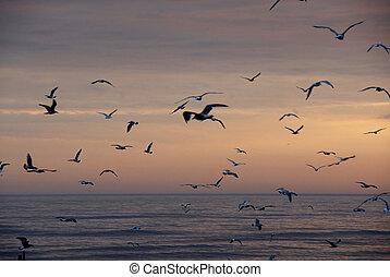 fåglar, i flykt