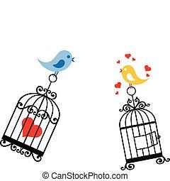 fåglar, i kärlek, med, fågelbur