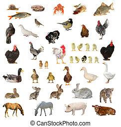 fåglar, och, djuren