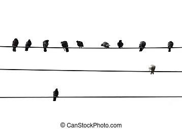 fåglar, på, tråd