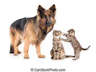 fåraherde, hund, och, katt, med, skrämd, kattunge