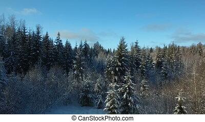 fée, forêt, hiver