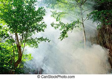 fée, rayon soleil, forêt