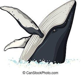 fél, test, közül, púpos ember bálnavadászat
