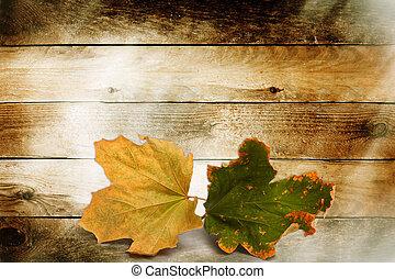 fényes, ősz kilépő, képben látható, a, fából való, háttér
