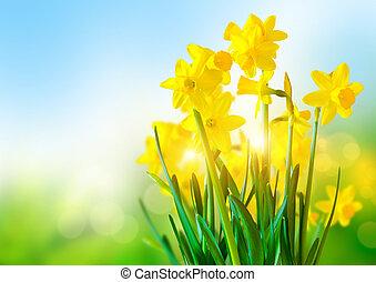fényes, sárga, nárciszok