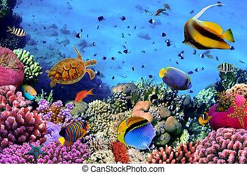 fénykép, közül, egy, korall, gyarmat, képben látható, egy, zátony, egyiptom